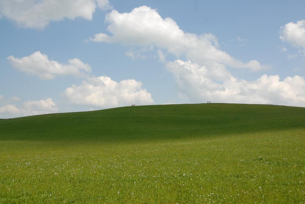 Grüne Idylle - Windows XP?