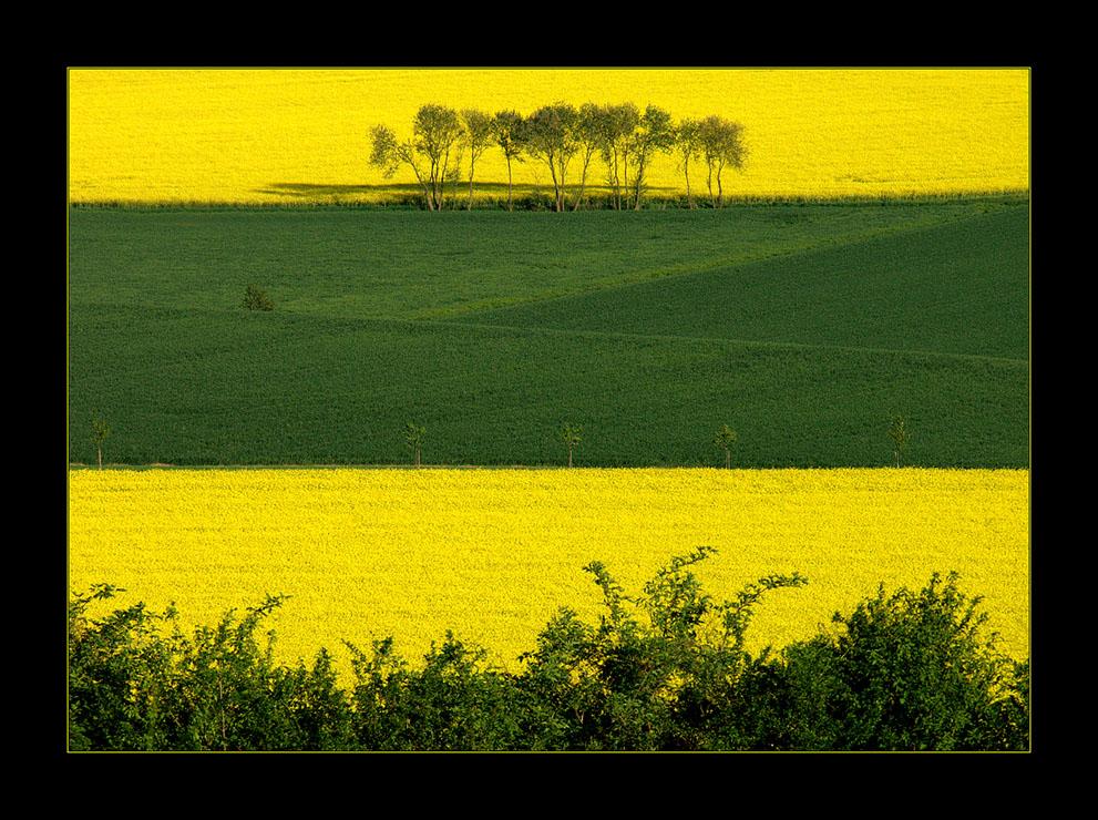 Grüne Inseln im gelben Meer... (9. DER REIHE: WAS MAN MIT RAPS...)