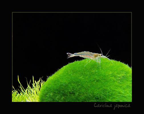 Grüne Kügel