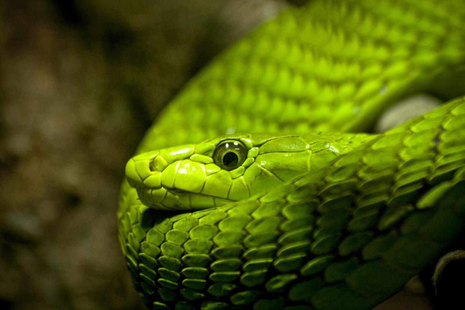 grüne Mama