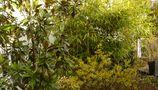 grüne oase von nitonga