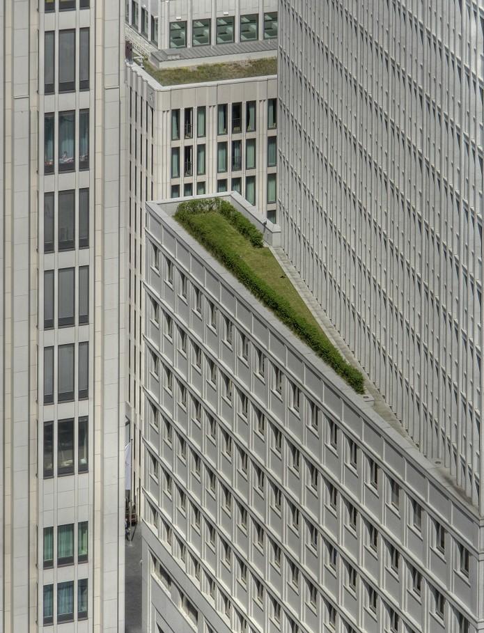 grüne oase