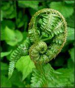 Grüne Ohren...