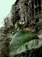 Grüne Ruine