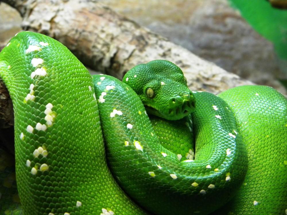 Grüne Schönheit