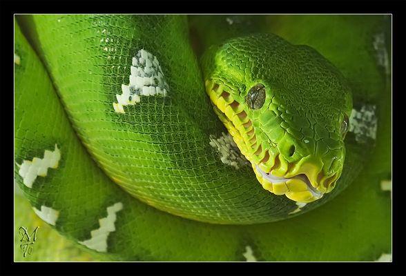 Grüne Schönheit **