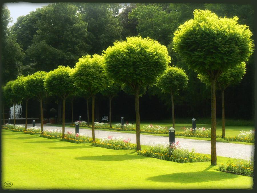 Grüne Symmetrie