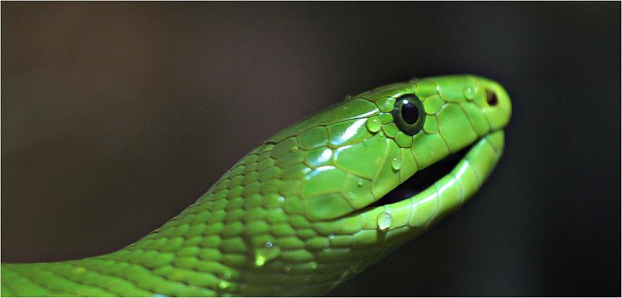 grüne ungeliebte Schönheit...