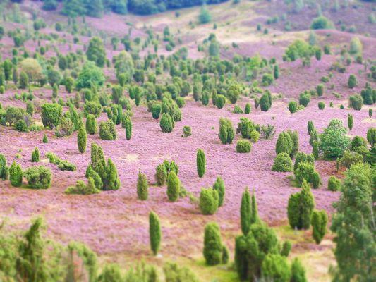 Grüne Wattebäusche auf lila Flokati-Teppich