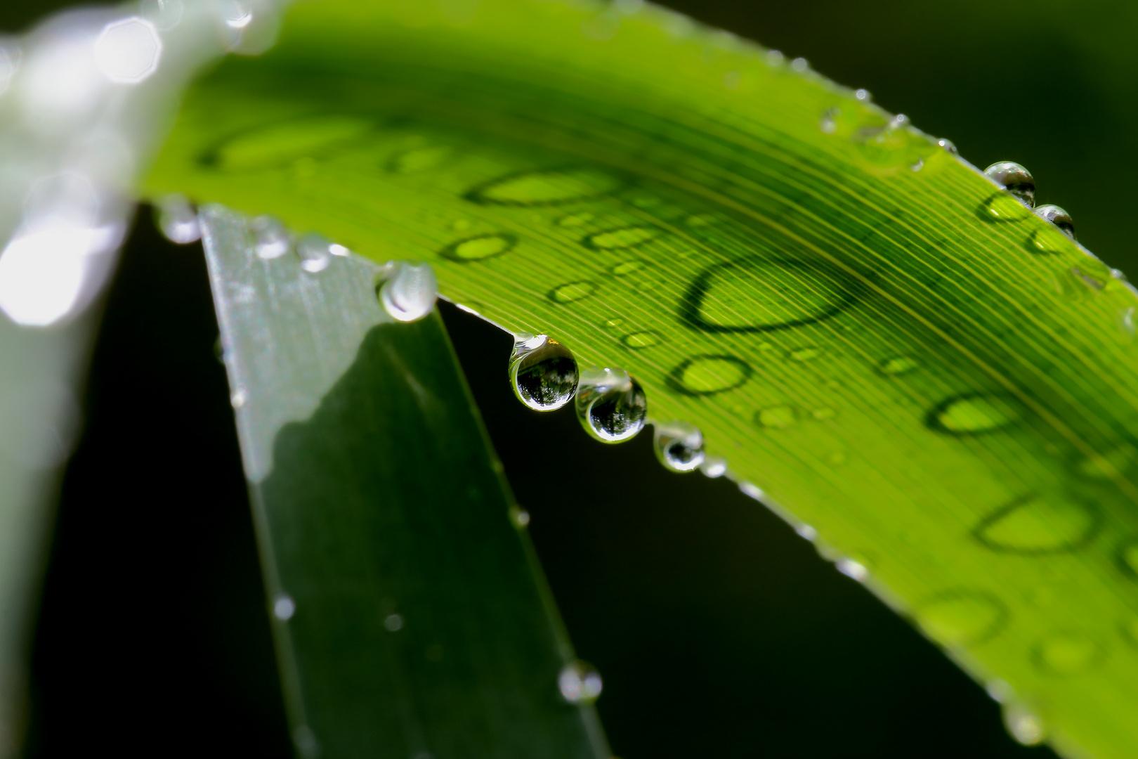 Grüne Welt der Wassertropfen