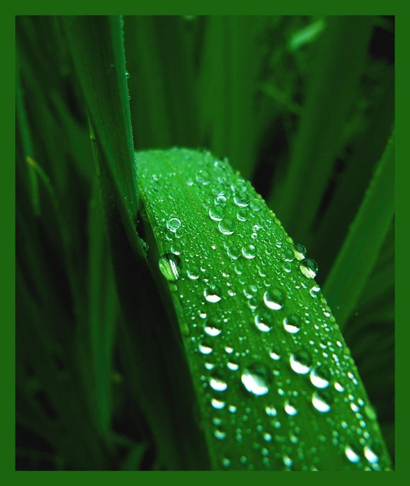 grüne Zunge