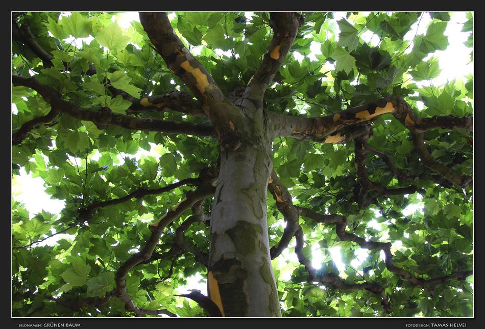 Grünen Baum