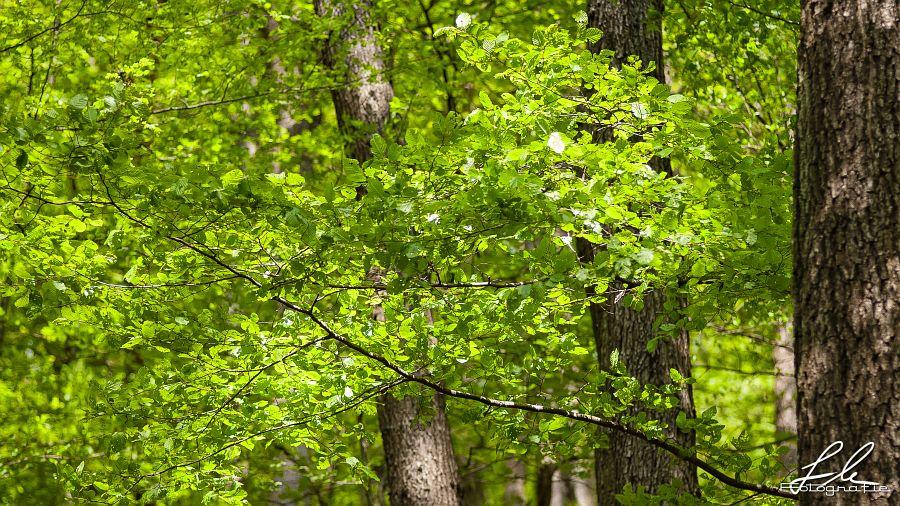 Grüner Blätterwald im Frühling