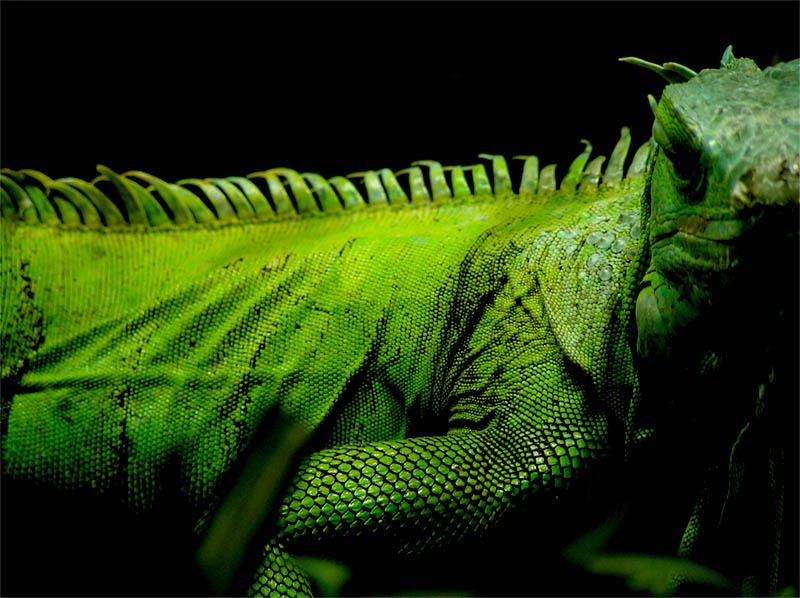 Grüner Blick