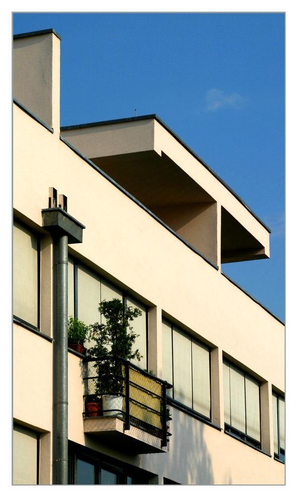 Grüner Fleck auf der Fassade
