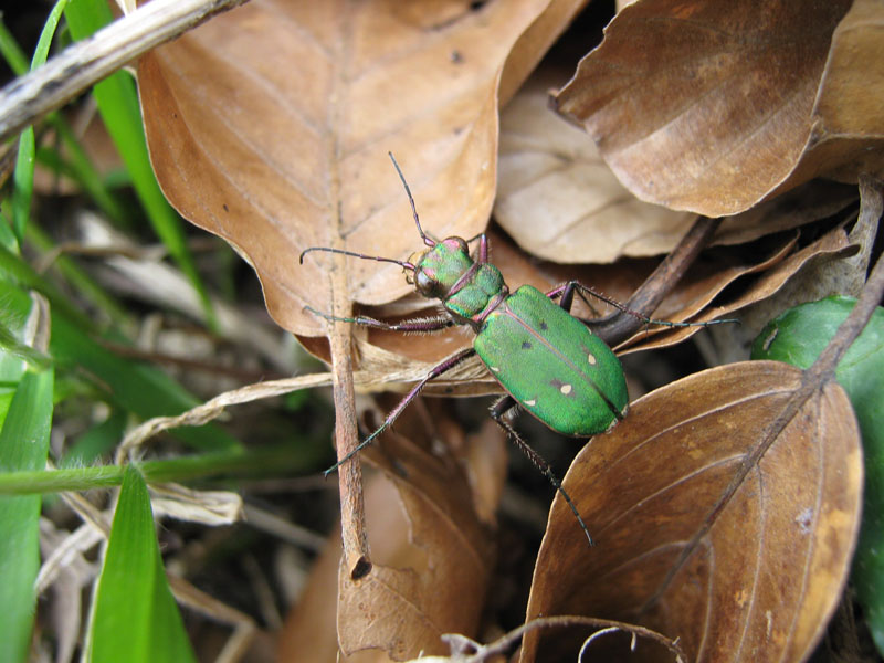 Grüner Flitzer