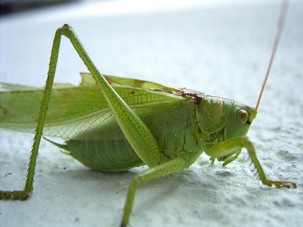 Grüner Freund...