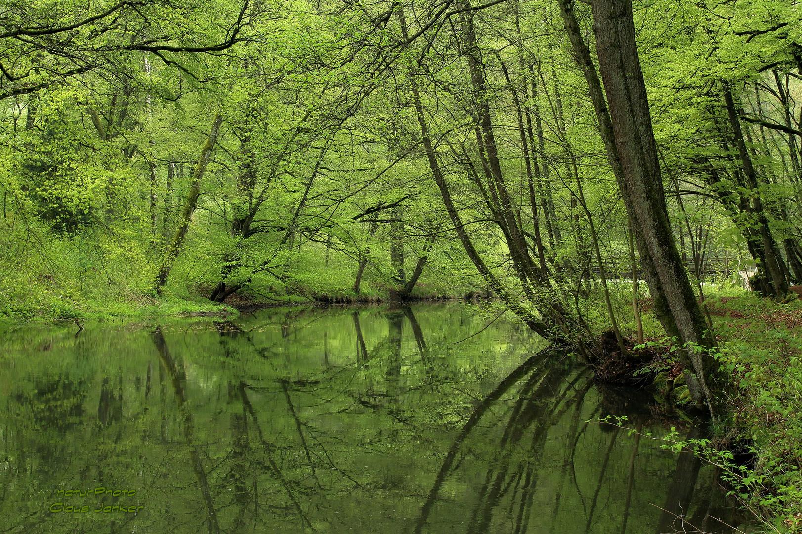 Grüner Frühlingstraum an der schwarzen Laber
