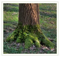 Grüner Fuß