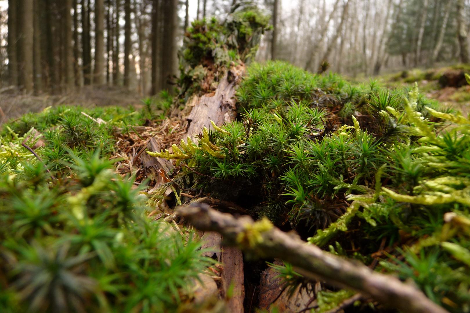Grüner Moosteppich