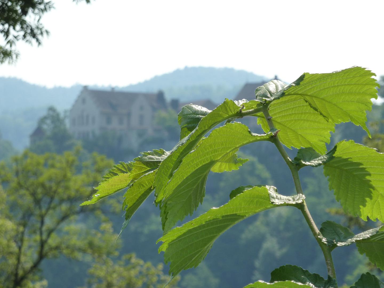 grüner Strauch