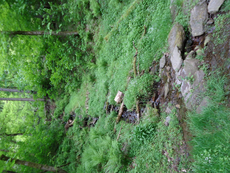 grüner thüringer Wald
