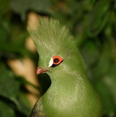 Grüner unbekannter Vogel im Zoo Basel/CH
