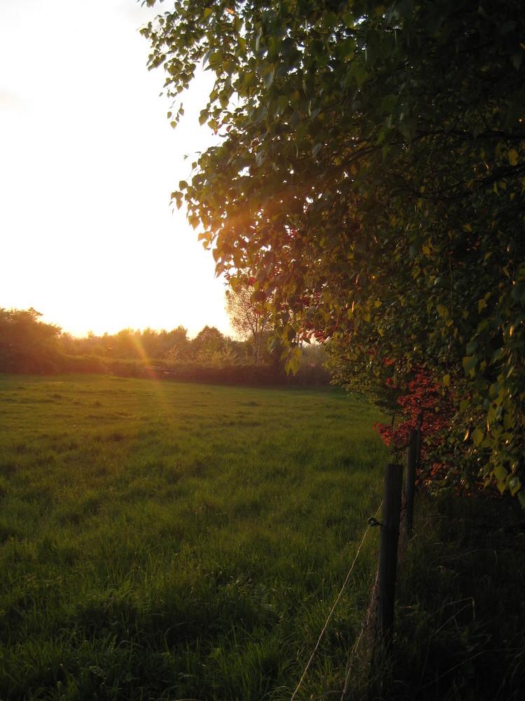 Grünerfrühlingstagsonnsnuntergang