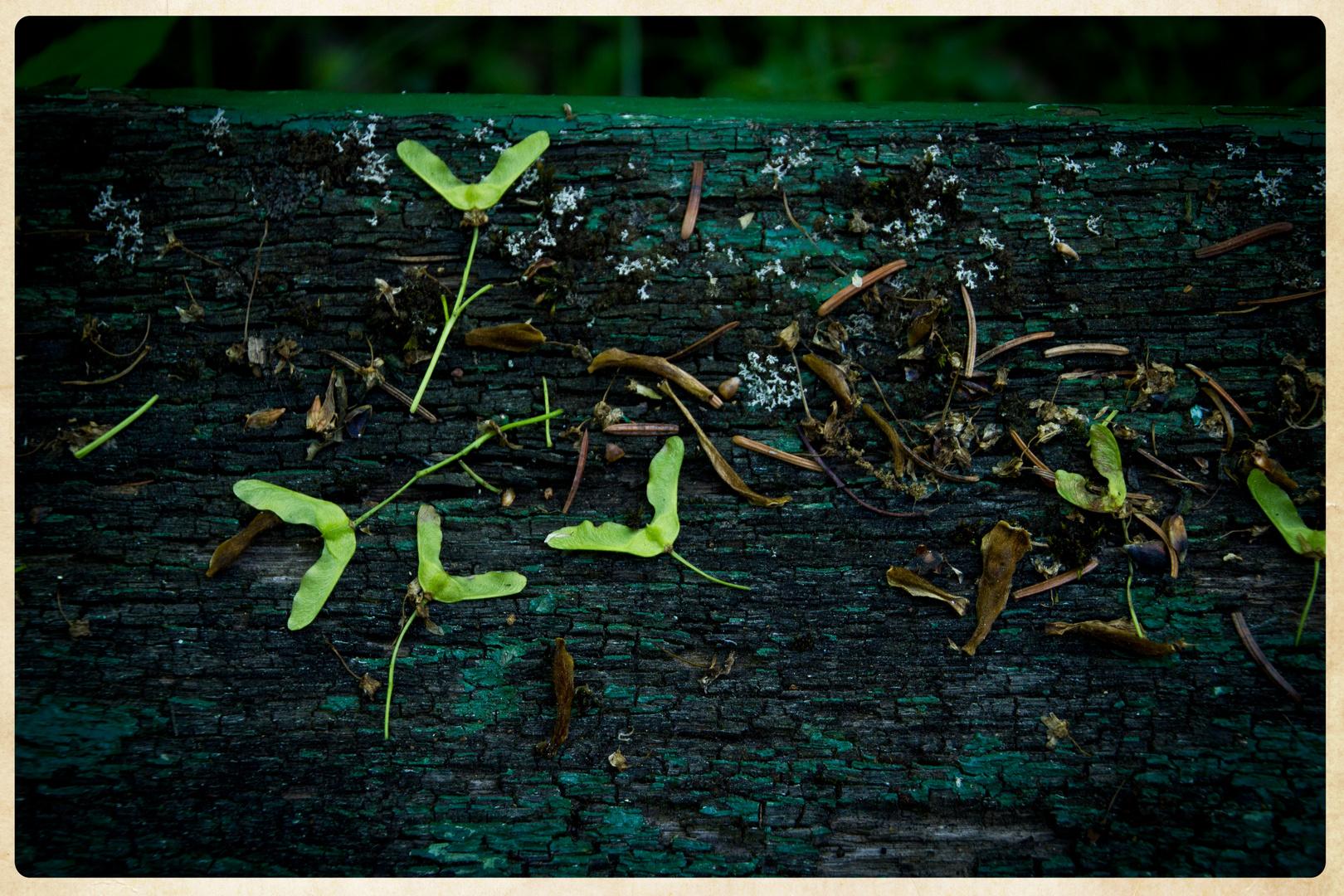 Grünes Arrangement
