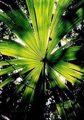 Grünes Blatt (Tikal, Guatemala)