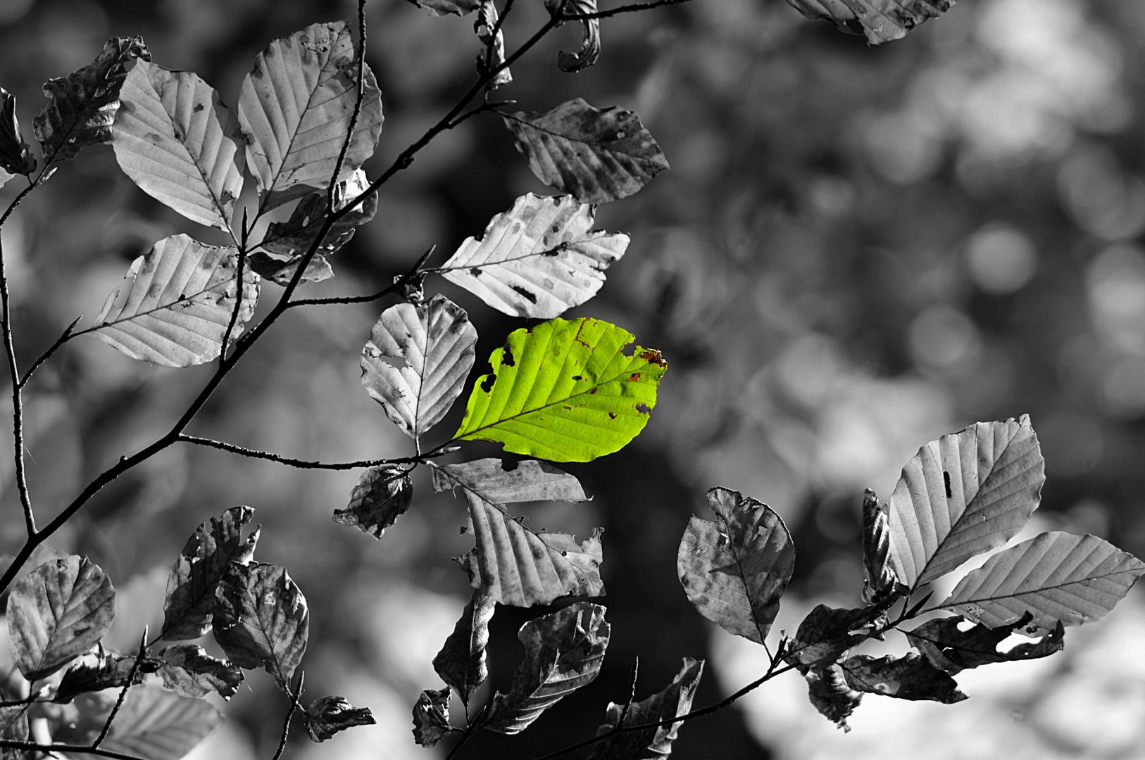 grünes im Herbst
