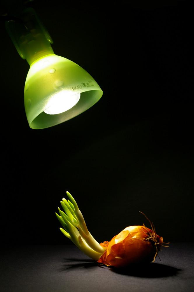 grünes licht...