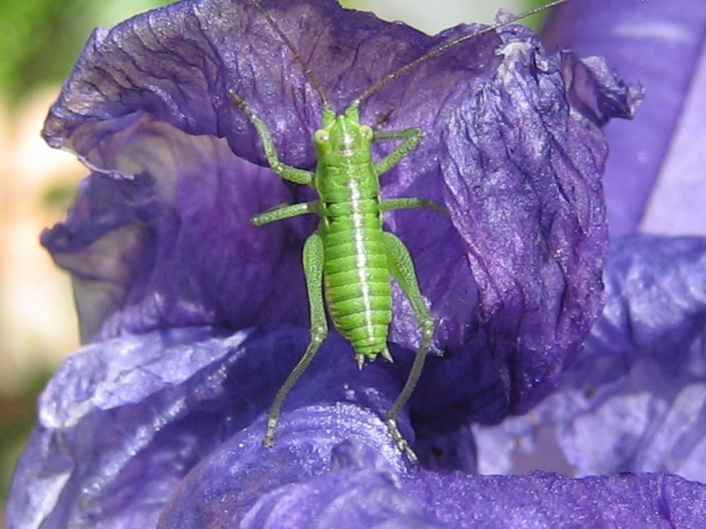 Grünes Männchen