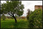 Grünes Mallorca...