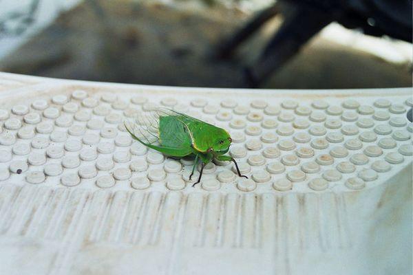 grünes Tier?!