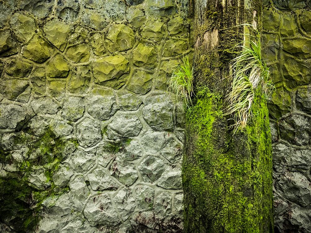 Grünes Ufer 1