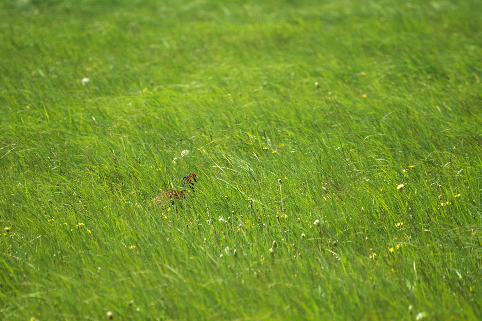 Grünes Versteck