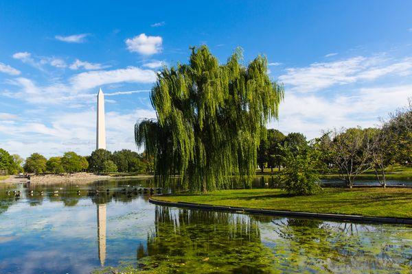 Grünes Washington DC