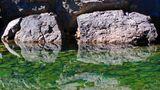 grünes Wasser by Christa Kramer