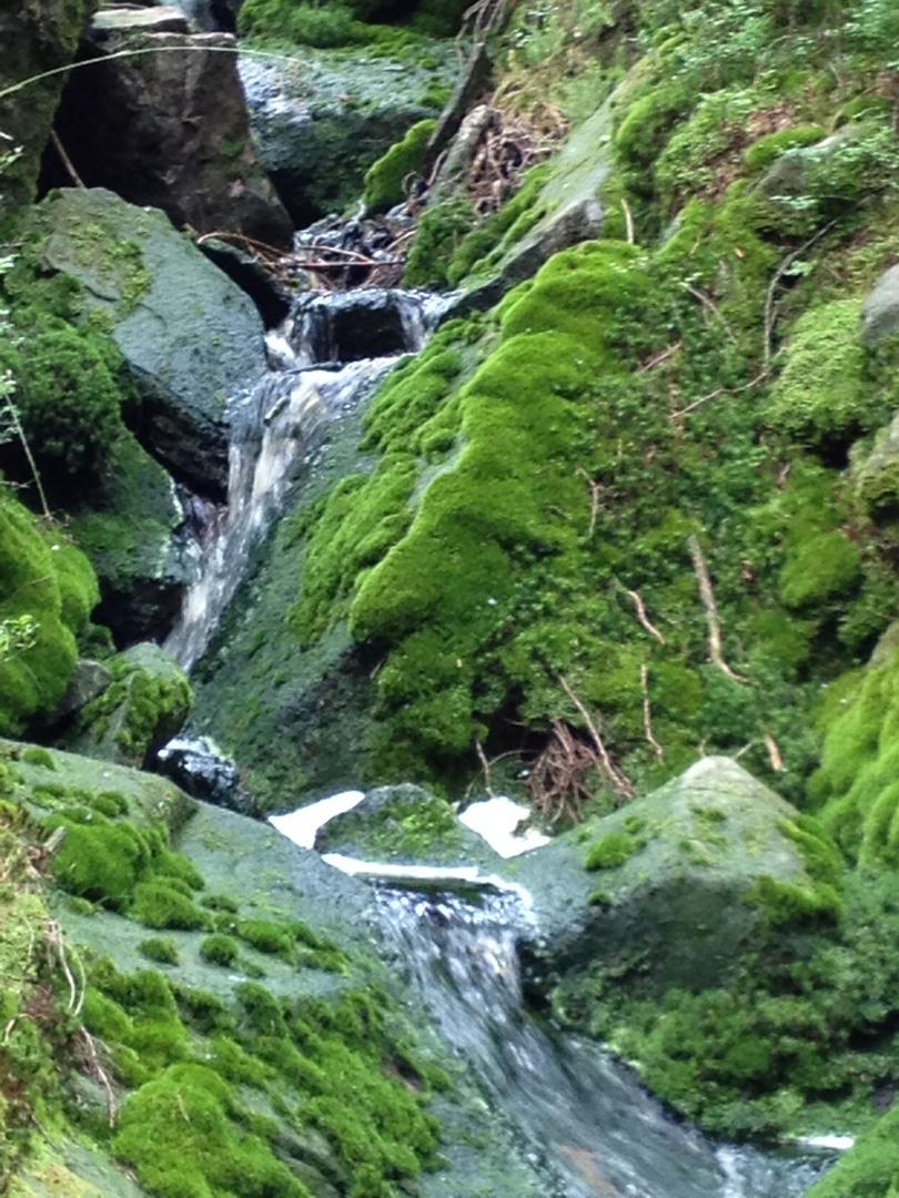 Grünes Wasser