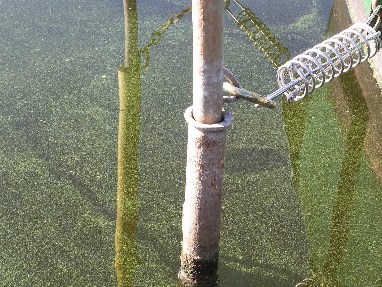 grünes Wasser in Werder