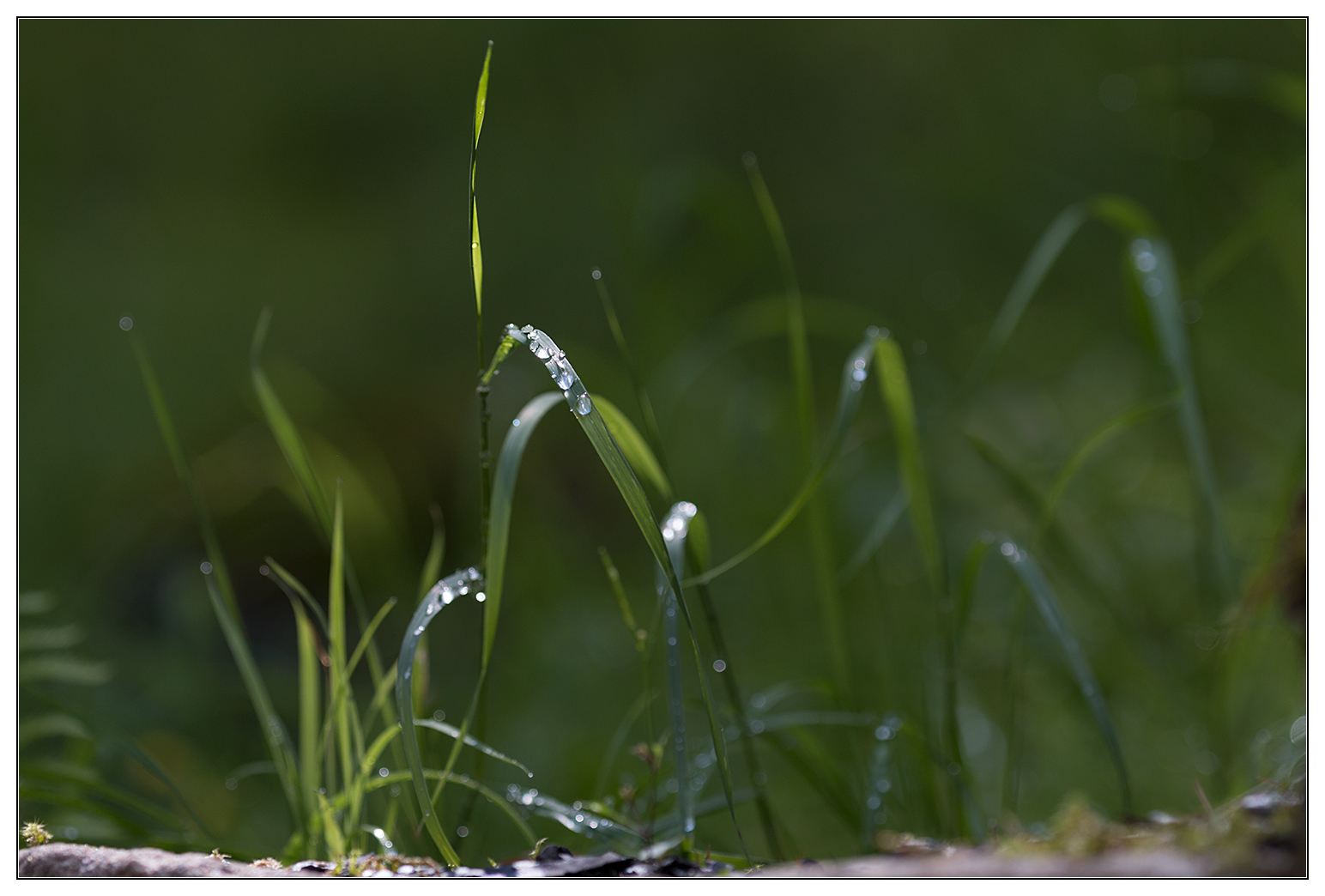 grünes Wunder (2)