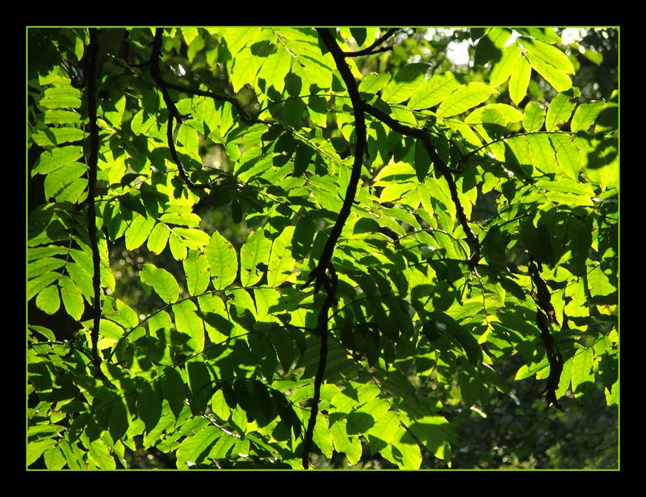 Grün.II