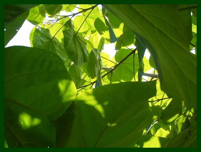 Grün...ist die Hoffnung