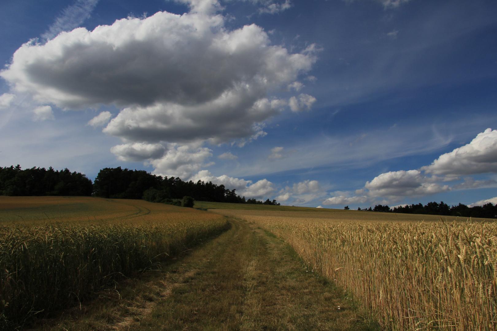 Grünsfelder