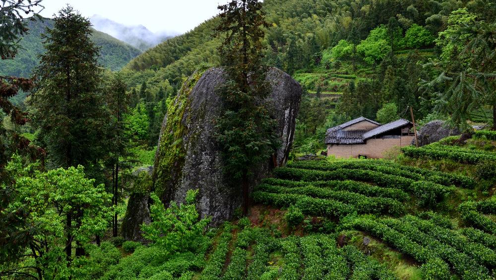 Grüntee Feld im Tianmu Gebirge