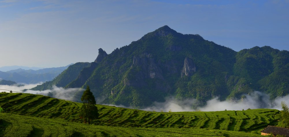 Grüntee Feld vor dem Fozi Berg 1348m Version 1
