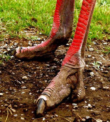 Grüße aus dem Jurassic-Park