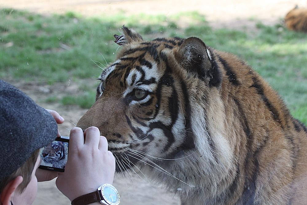 Grüße aus dem Lissabonner Zoo