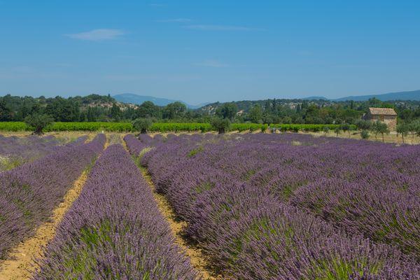Grüsse aus der Provence